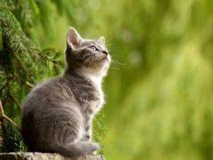 Czy każdy kot powinien mieć podcinane pazurki