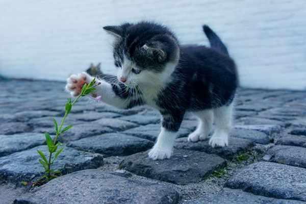 Dlaczego warto bawić się z kotem?