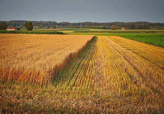 Kredyt preferencyjny na sfinansowanie zakupu ziemi rolniczej
